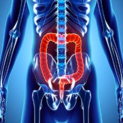 intestin